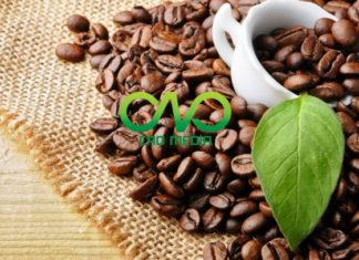Thủ tục công bố sản phẩm cà phê nhập khẩu